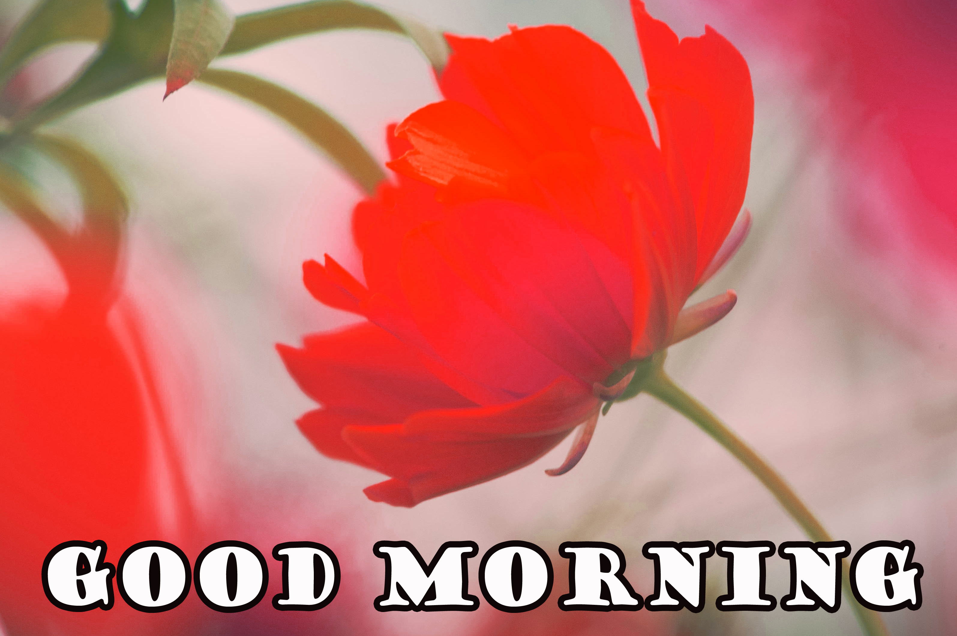 Good Morning Flowers Wallpaper Photo Images For Facebook