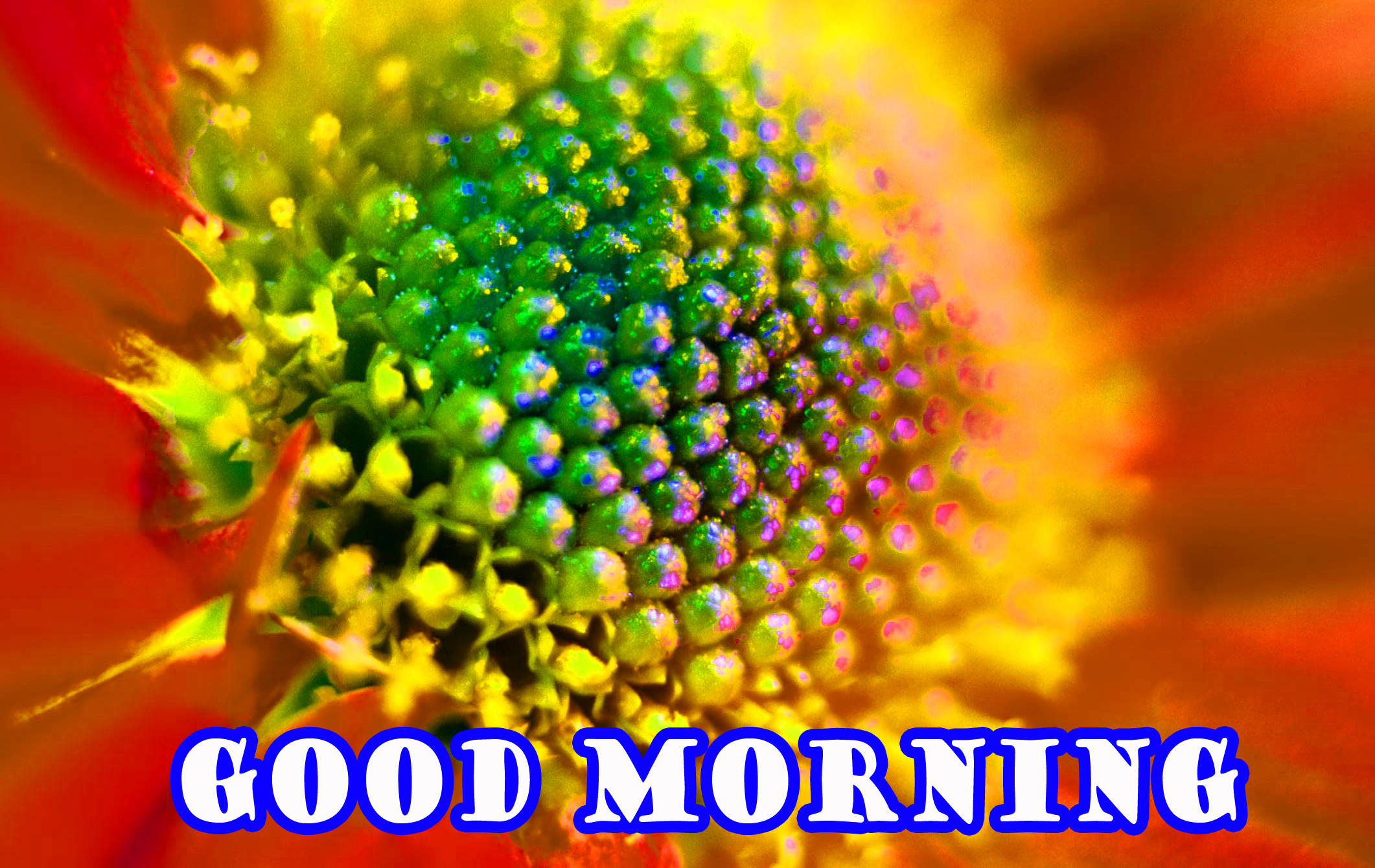 Good Morning Flowers Wallpaper Pictures Images For Whatsapp