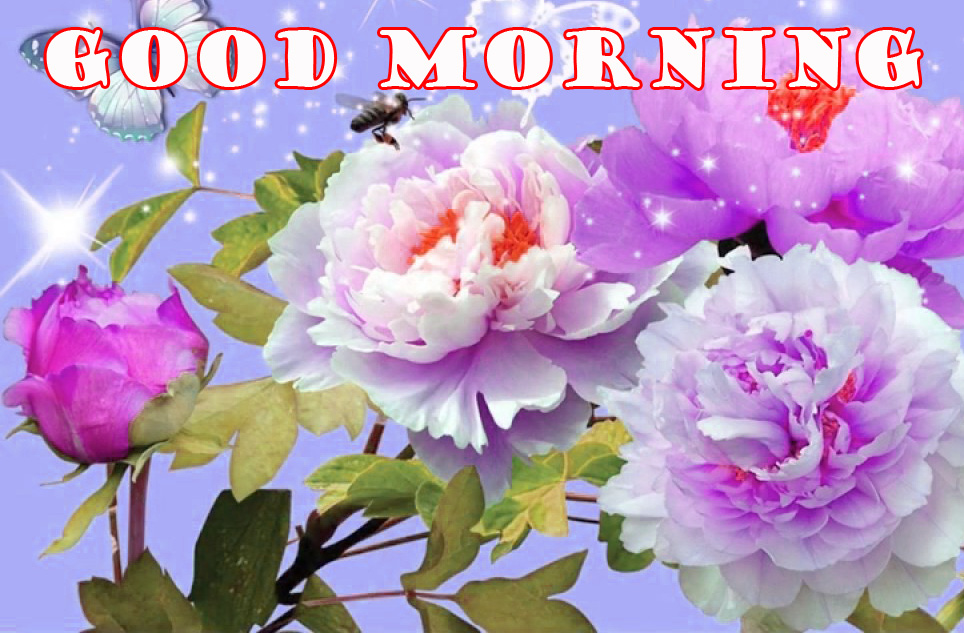 Good Morning Flowers Images Pictures Photo Free HD Download