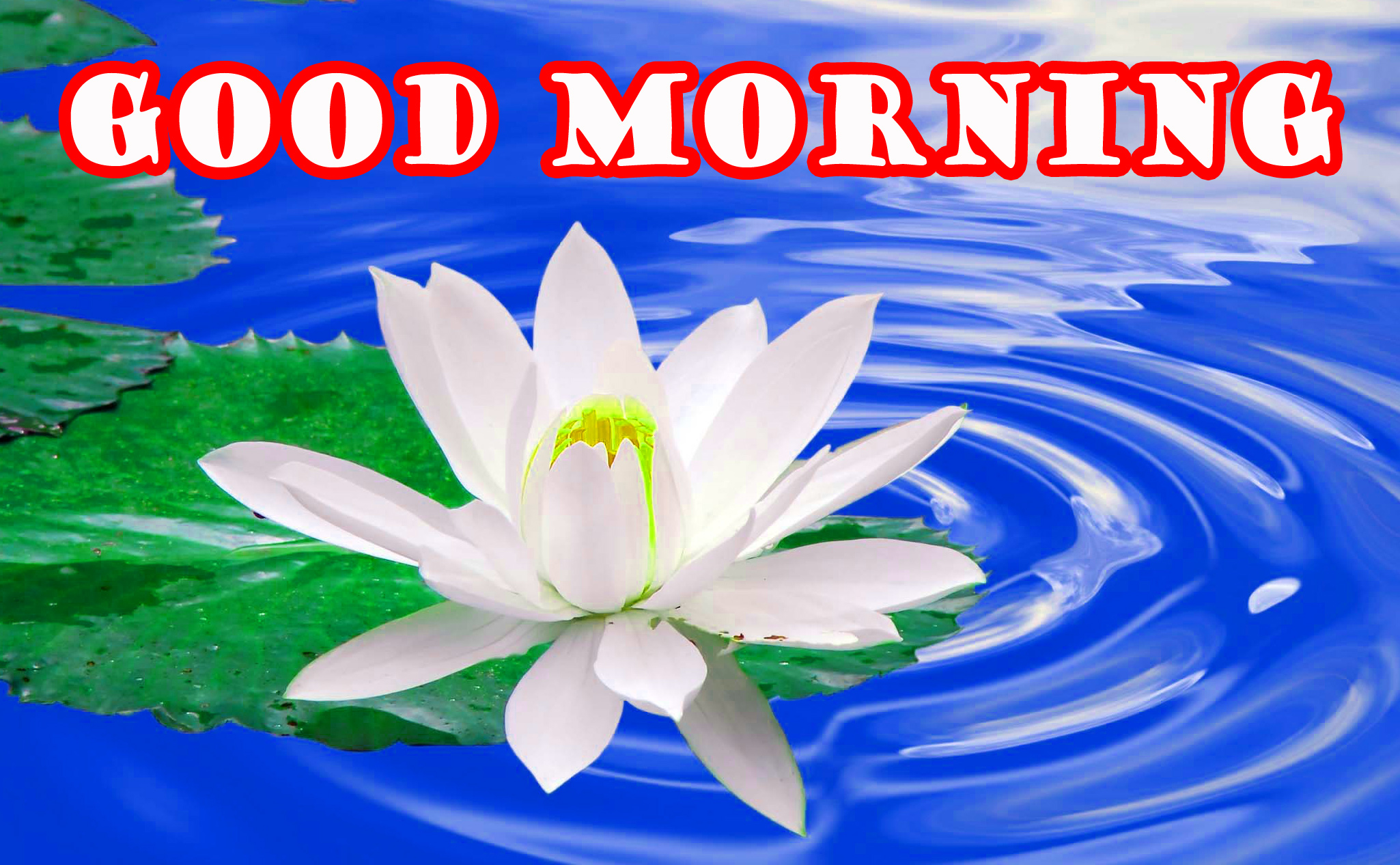 Good Morning Flowers Photo Wallpaper Pictures HD Download