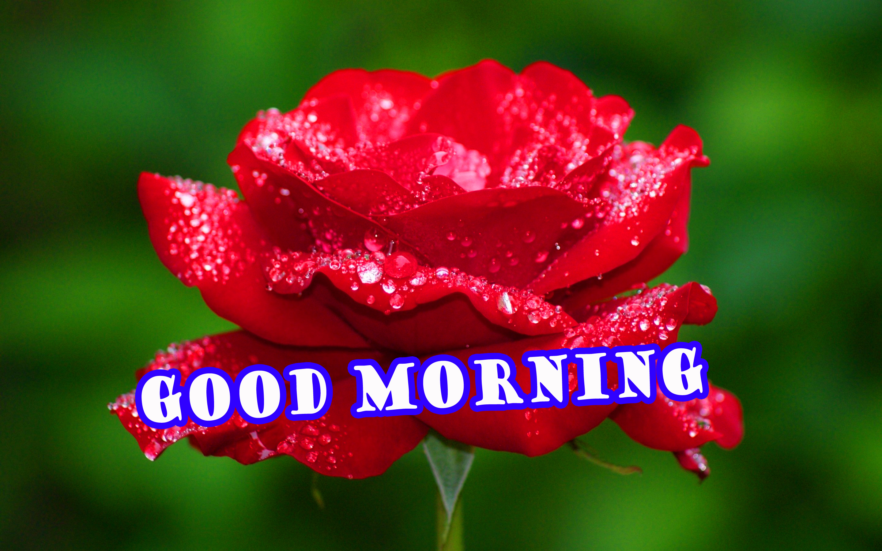Good Morning Flowers Pictures Images Photo Free HD