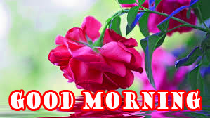 Good Morning Flowers Wallpaper Pictures Photo Download