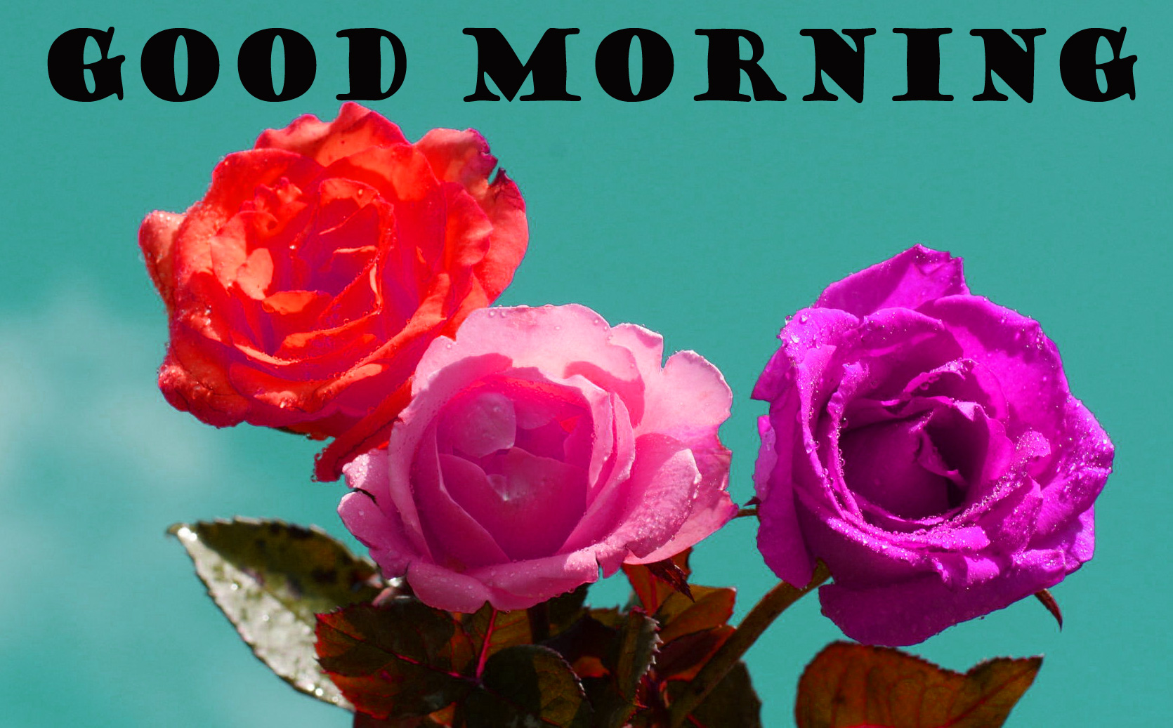 Good Morning Flowers Photo Wallpaper Pictures Free HD Download