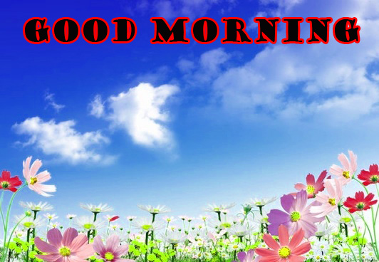 Good Morning Flowers Wallpaper Pictures Download