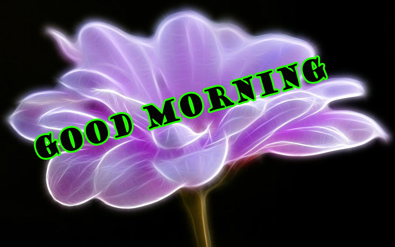 Good Morning Flowers Wallpaper Pictures Images Photo HD