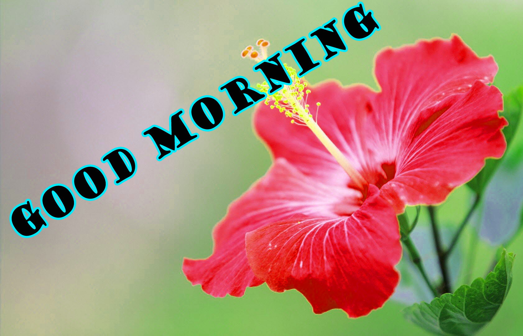 Good Morning Flowers Pictures Images Photo Free HD Download