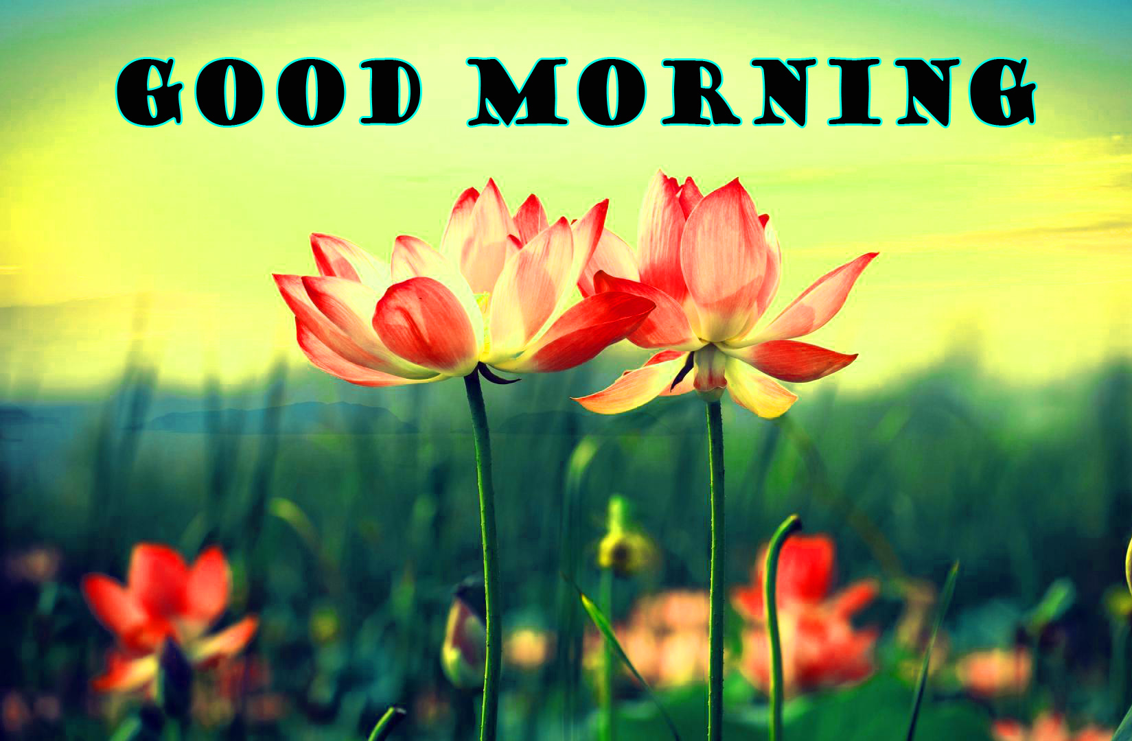 Good Morning Flowers Images Photo Wallpaper Download