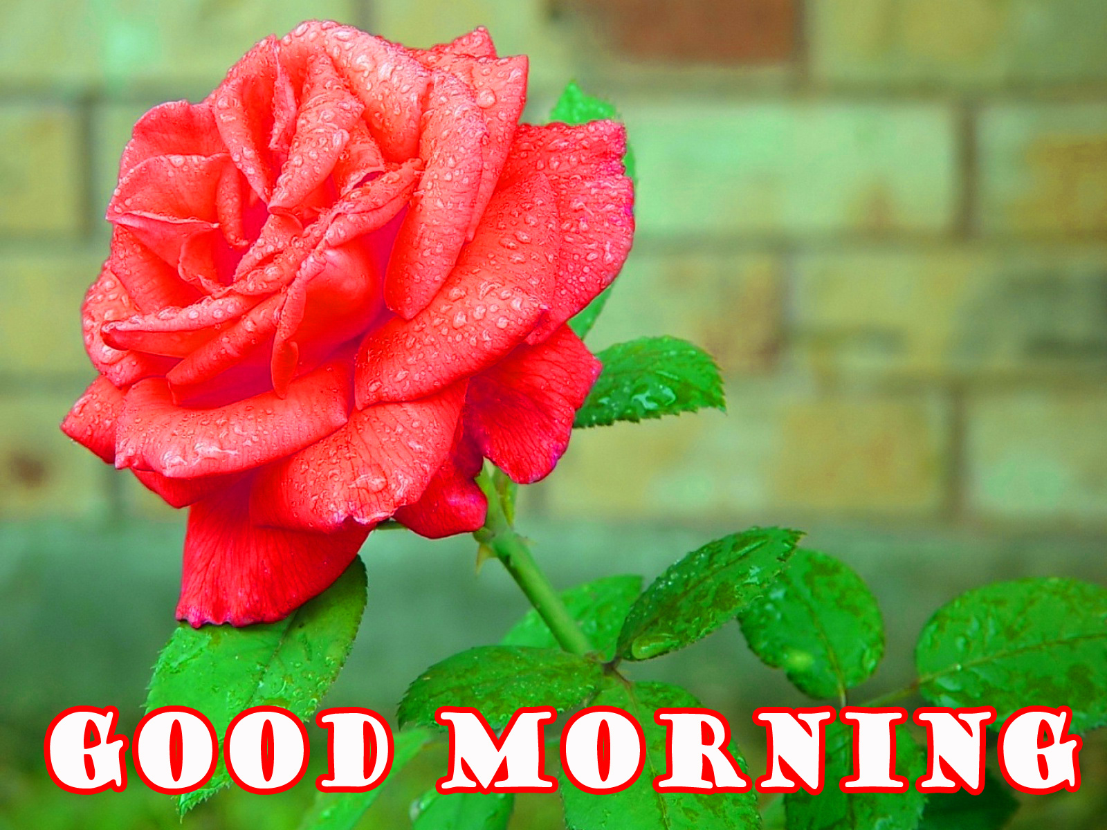 Good Morning Flowers Wallpaper Photo Download