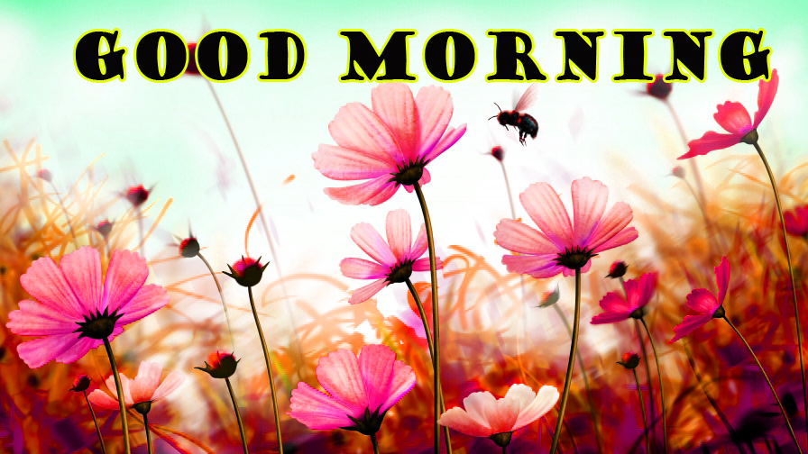 Good Morning Flowers Photo Images Pictures Free Download In HD