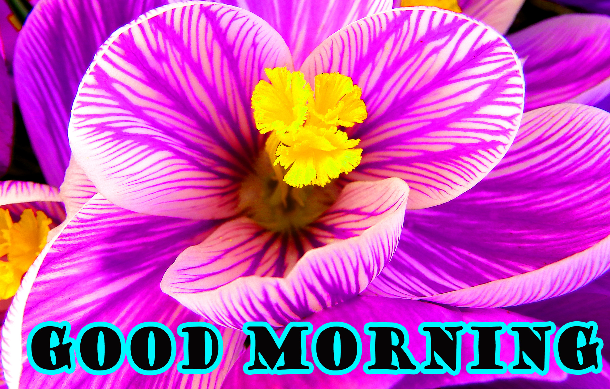 Good Morning Flowers Wallpaper Photo Images Free HD Download
