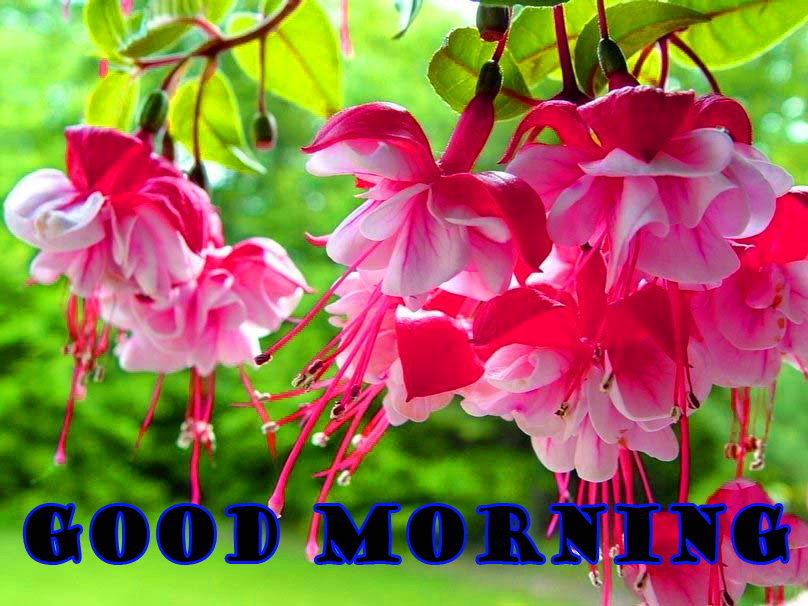 Good Morning Flowers Wallpaper Pictures Images Downlaod