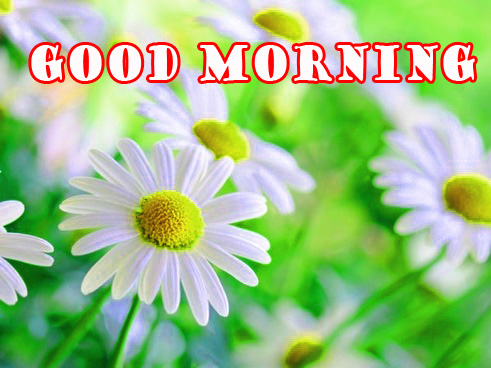 Good Morning Flowers Wallpaper Pictures Free HD Download