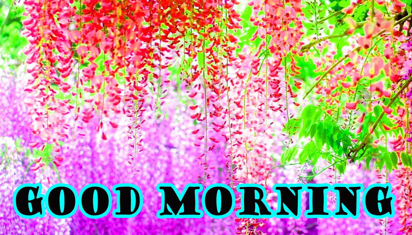 Good Morning Flowers Wallpaper Pictures Photo HD