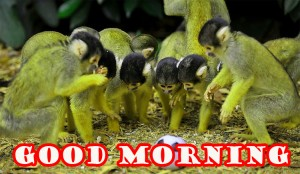 Funny Good Morning Photo Wallpaper Pictures HD For Whatsapp