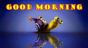 Funny Good Morning Photo Wallpaper Images Download