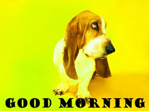 Funny Good Morning Photo Wallpaper Pictures Images Fee Download