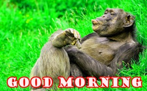 Funny Good Morning Photo Wallpaper Pictures Images Download