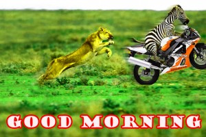Funny Good Morning Wallpaper Photo Images Download In HD