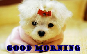 Funny Good Morning Wallpaper Pictures Download