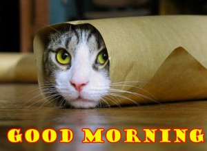 Funny Good Morning Photo Pictures Images Photo Download