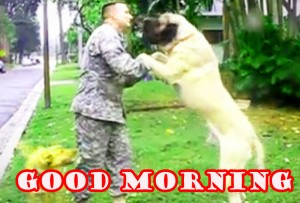 Funny Good Morning Photo Wallpaper Pictures Free HD Download