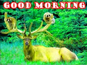 Funny Good Morning Wallpaper Pictures Images HD For Whatsapp