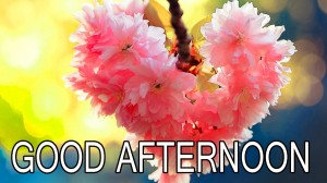 good-afternoon-Good Afternoon Pictures Wallpaper Pics Free Download
