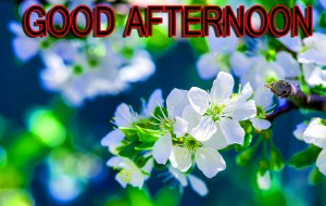 Good Afternoon Pictures Wallpaper Pics Wallpaper Pictures HD Downlaod