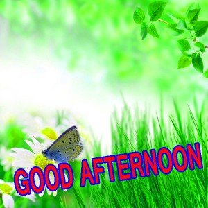 Good Afternoon Pictures Wallpaper Pics Photo Download
