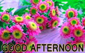 Good Afternoon Pictures Wallpaper Pics Free Downlaod
