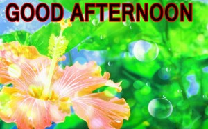 Good Afternoon Pictures Wallpaper Pics Download