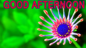 good-afternoon-Good Afternoon Pictures Wallpaper Pics Download