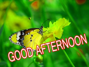 Good Afternoon Pictures Wallpaper Pics Images HD