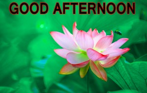 Good Afternoon Wallpaper Pictures Images Download In HD