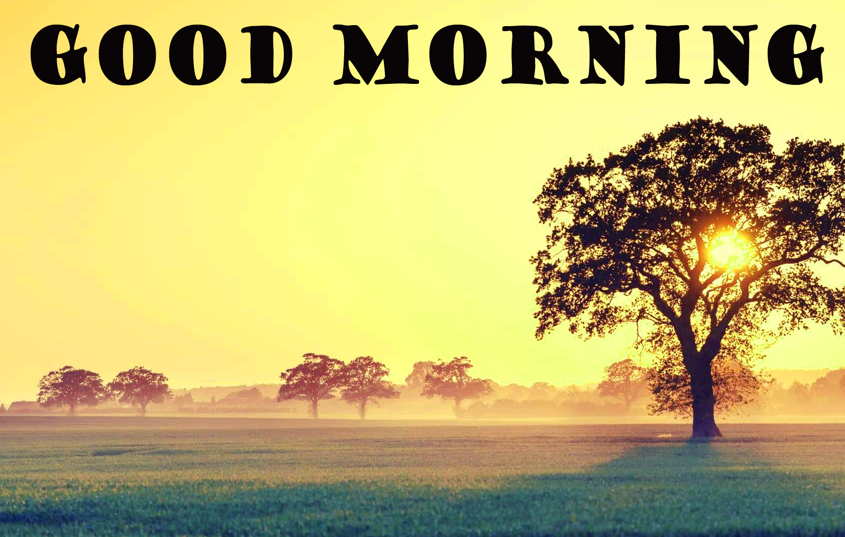 322+ Good Morning Images Wallpaper Photo Pics Pictures HD