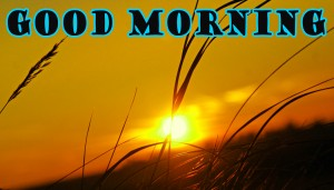Good Morning Wallpaper Pictures Images Photo Download