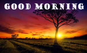 Good Morning Wallpaper Pictures Images HD Download