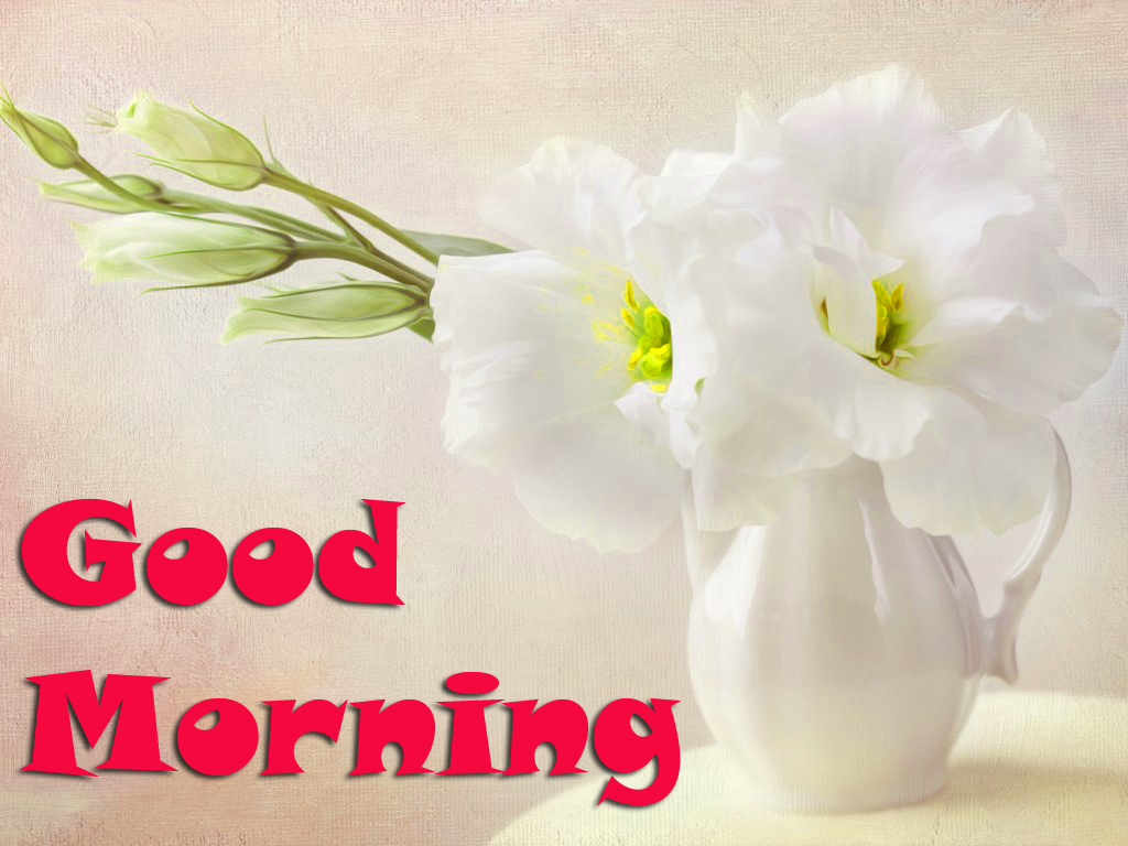 Good Morning Images Wallpaper Pics Photo Download