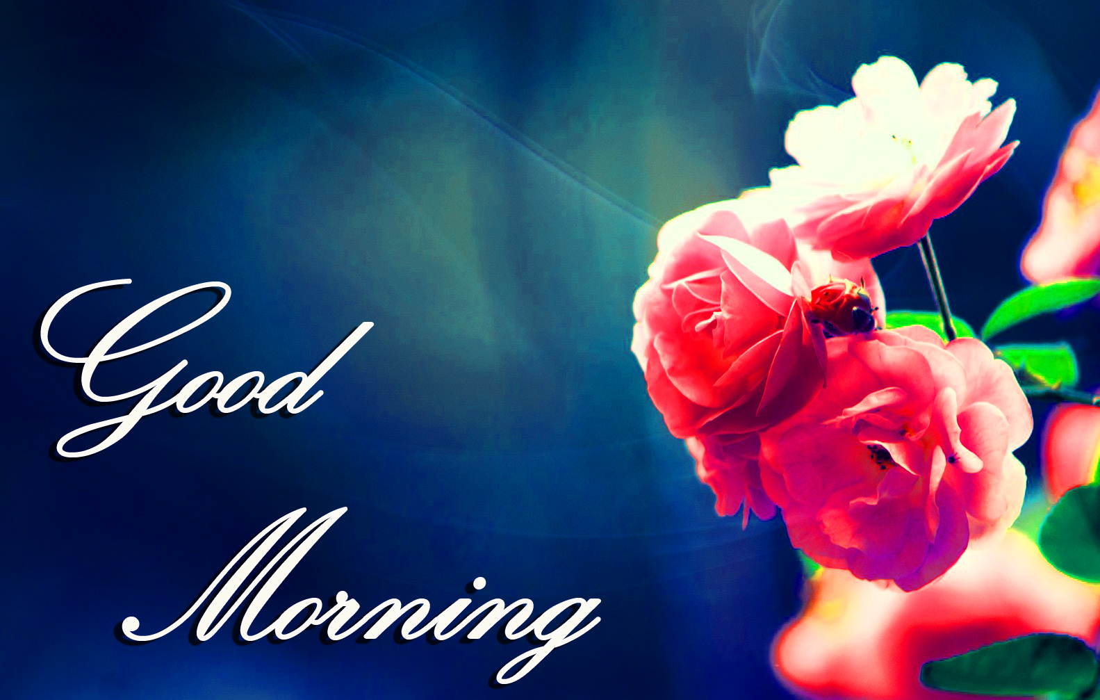 Good Morning Images Wallpaper photo Pictures Pics Free Download With Flower