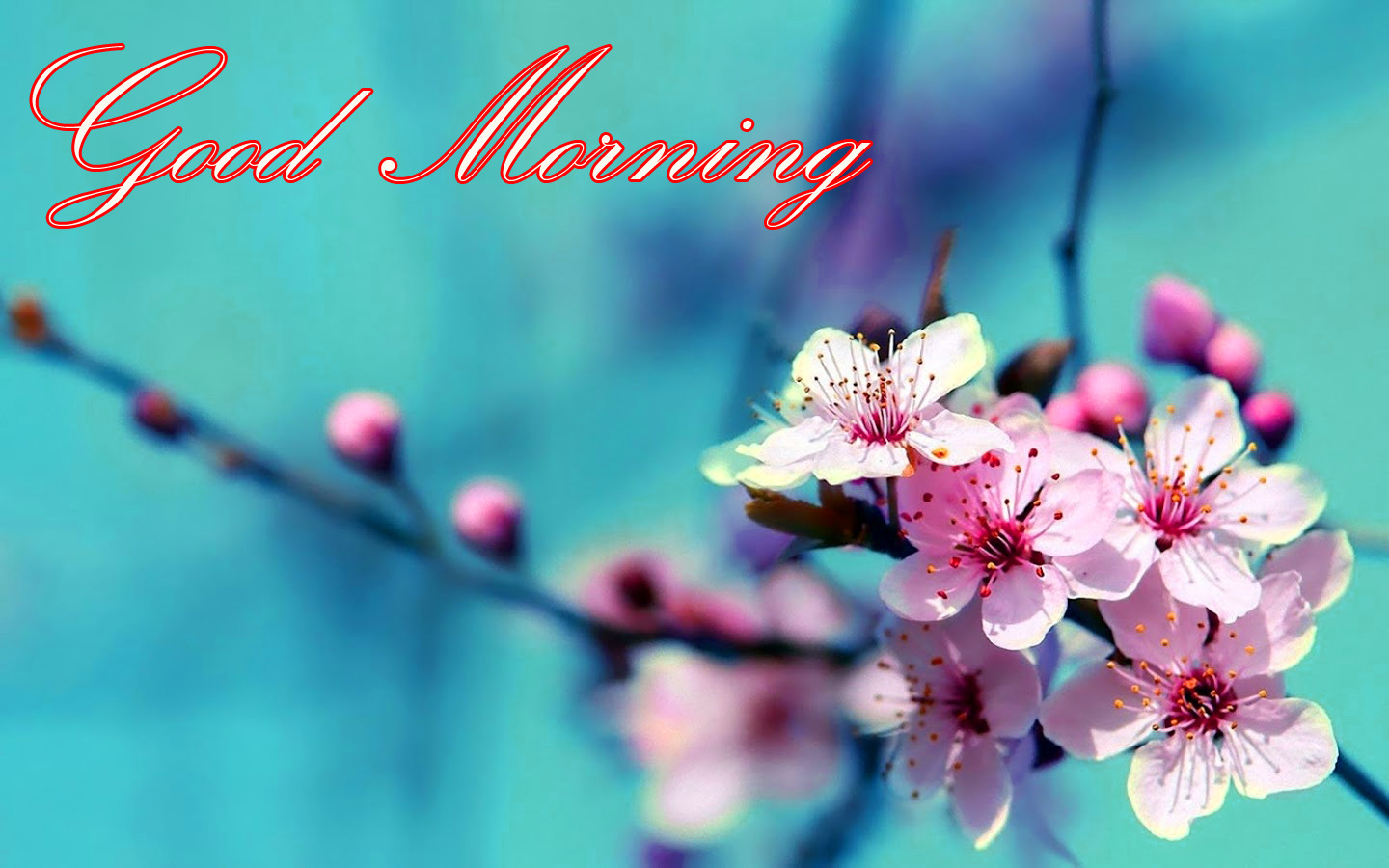 Good Morning Images Wallpaper pics With Nature HD Download