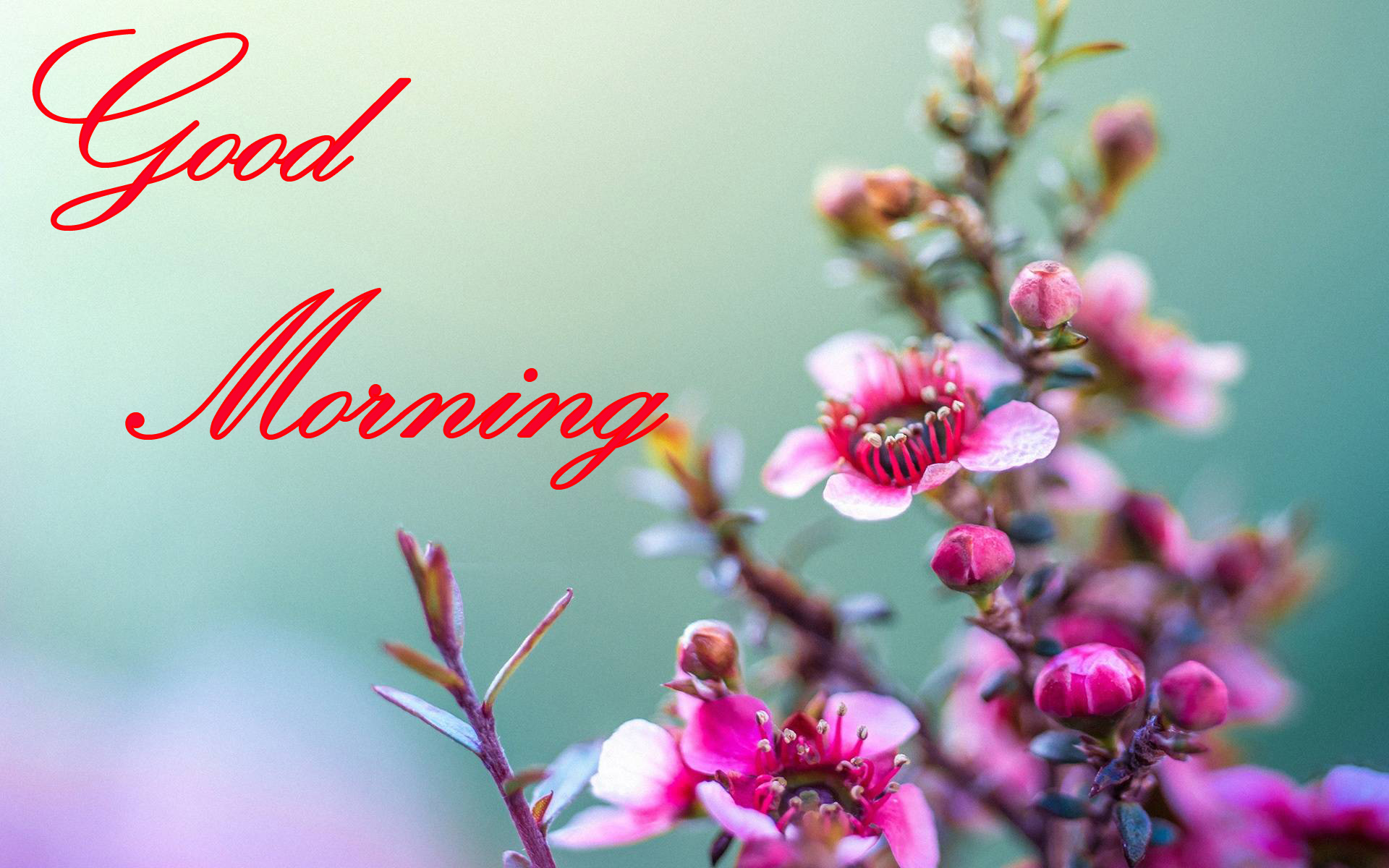 Good Morning Images Wallpaper Photo Pictures Pics Download