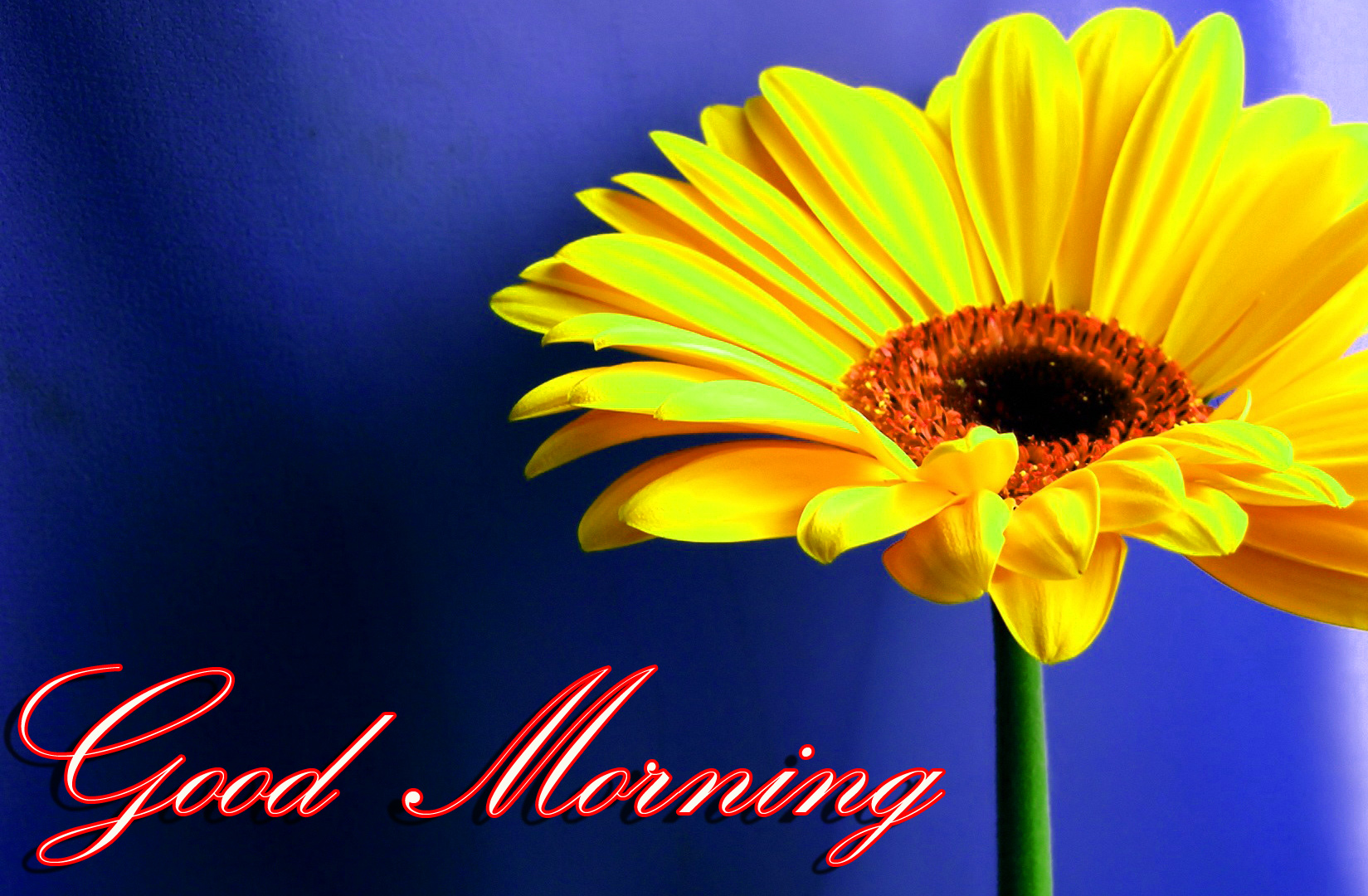 Good Morning Images Wallpaper Photo Pictures HD