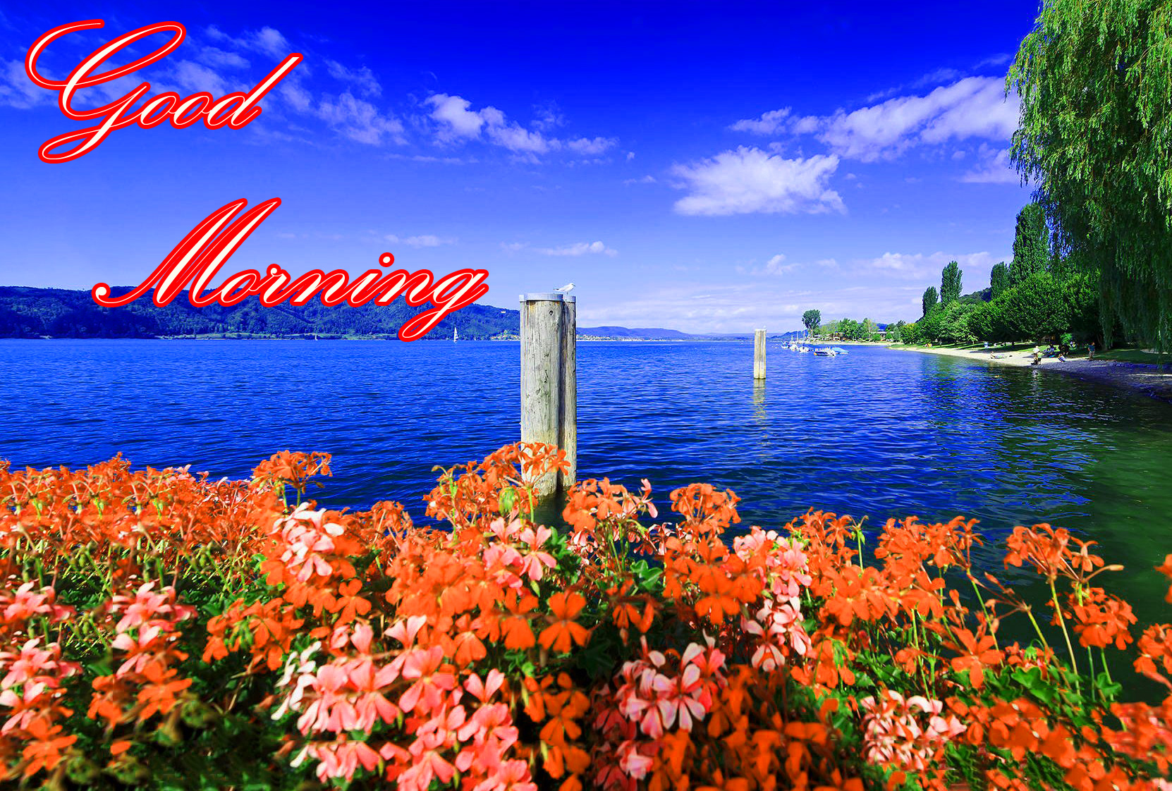 Good Morning Images Wallpaper photo Pictures Pics  HD For Facebook Download
