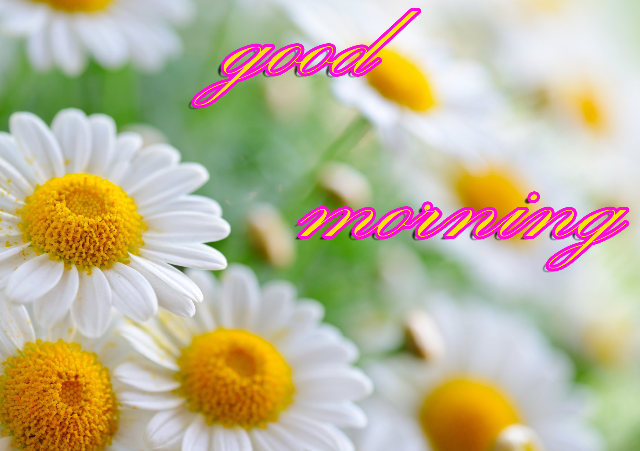Good Morning Images Wallpaper Photo Pics Download With Flower In HD