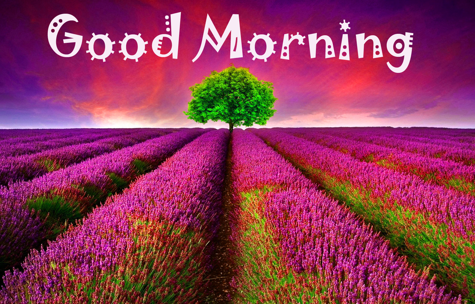 Good Morning Images Wallpaper Photo pictures Pics HD Download