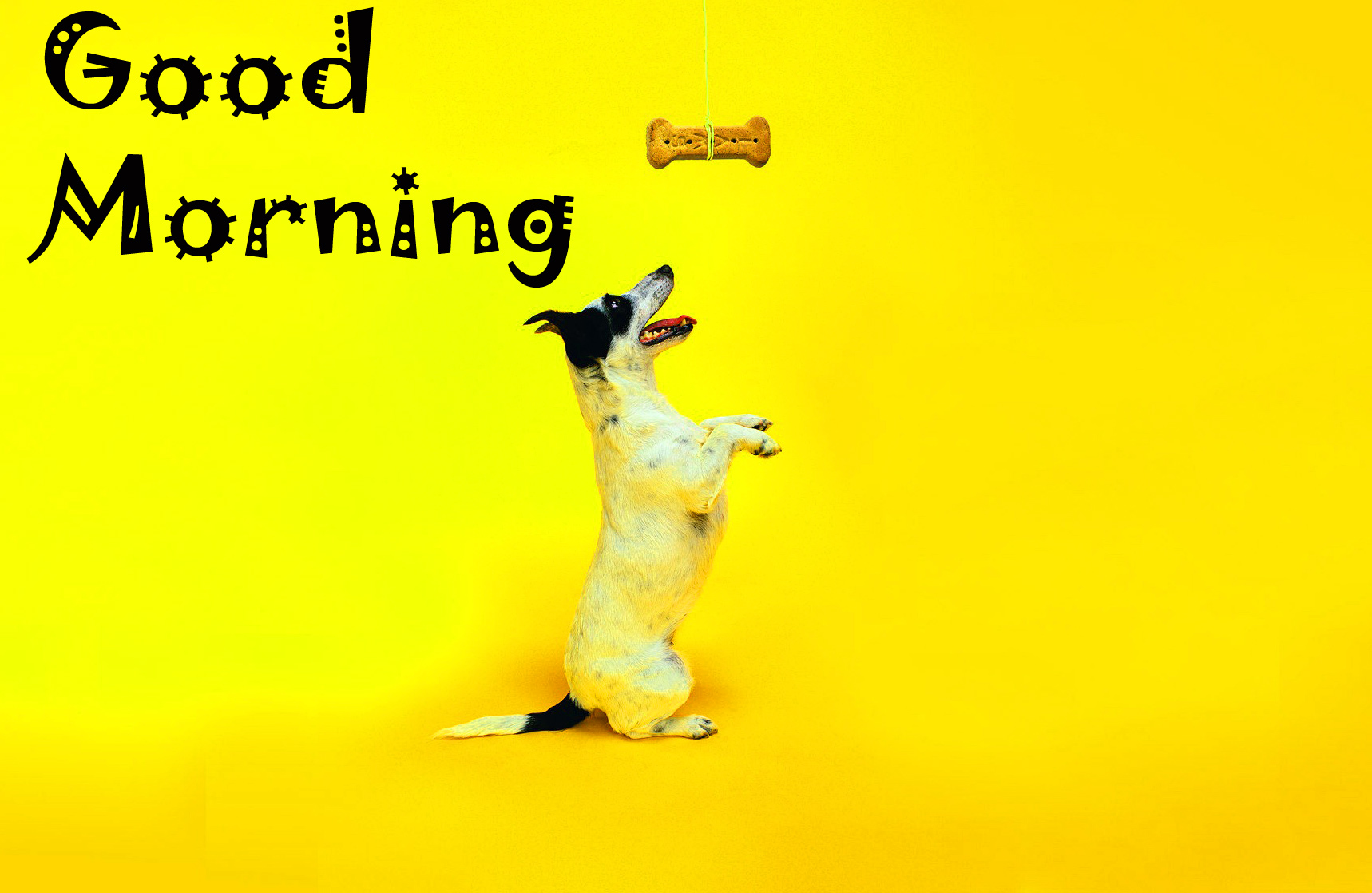 Good Morning Images Wallpaper Photo HD Download