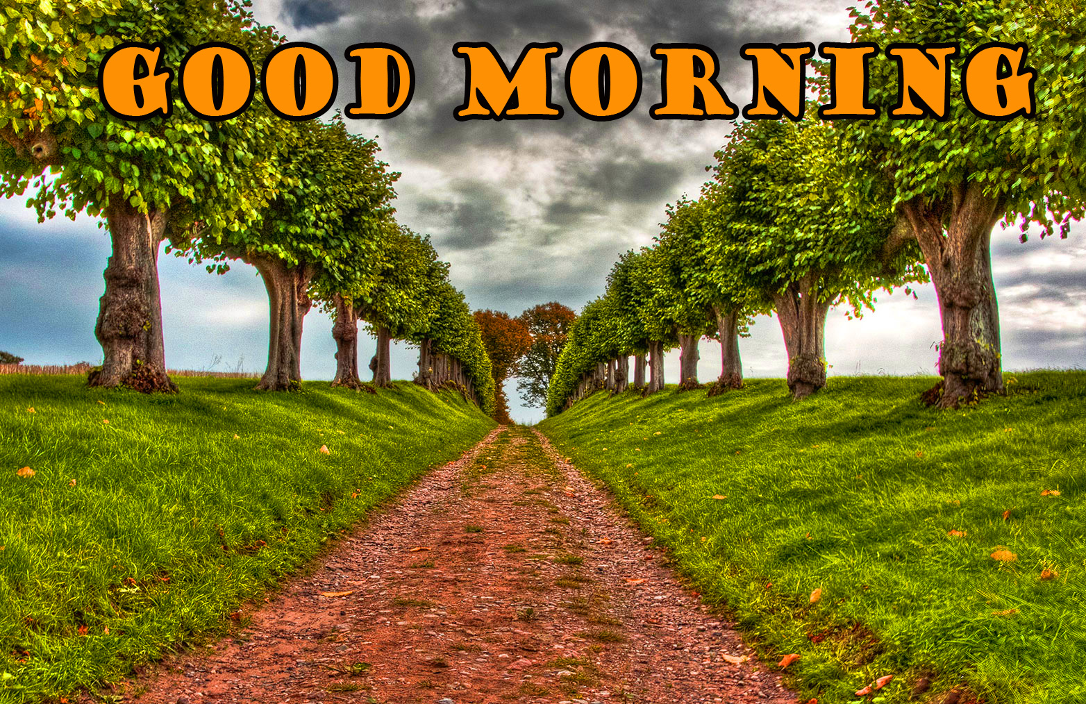 Good Morning Nature Pictures Images Photo HD