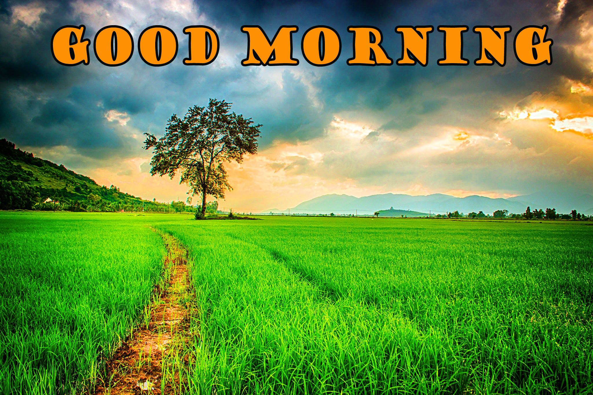 Good Morning Nature Images Pictures Wallpaper Download