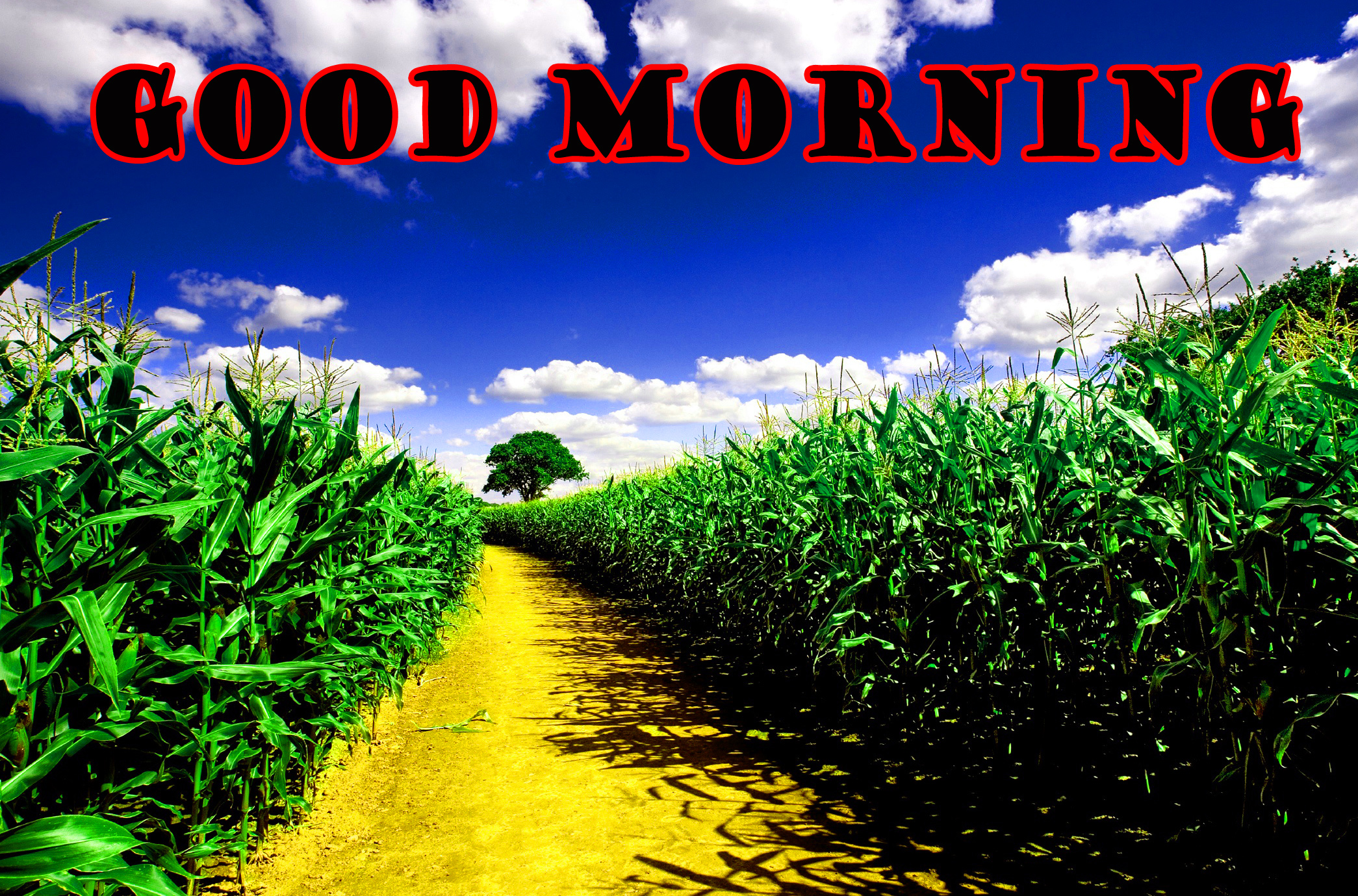 गुड मॉर्निंग New Wonderful Good Morning Wallpaper Images Download