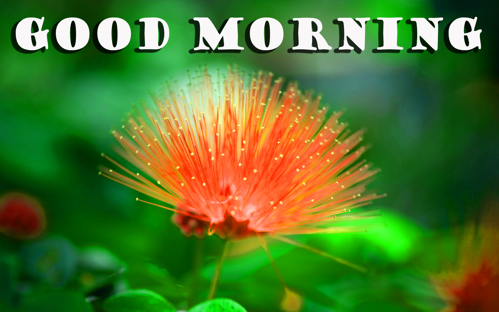 गुड मॉर्निंग New Wonderful Good Morning Pictures Images HD For Facebook